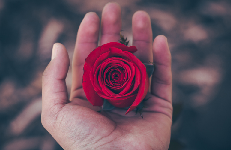 A hand holding a red rose (c) diego ph
