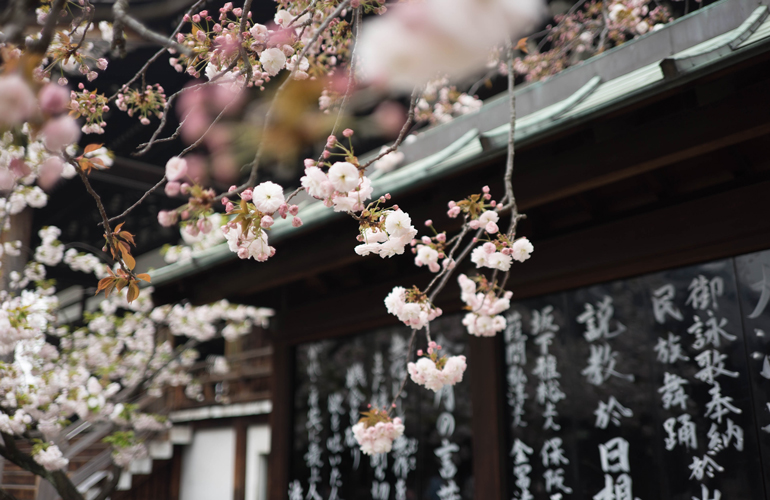 Blossom at a Shinto temple (c) Galen Crout