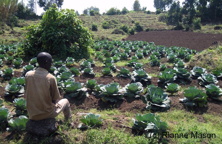 cabbages-in-rwanda-770x500