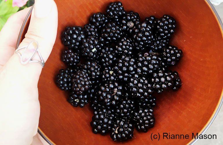 Blackberries (c) Rianne Mason