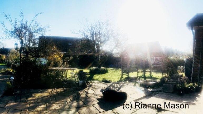 A garden (c) Rianne Mason