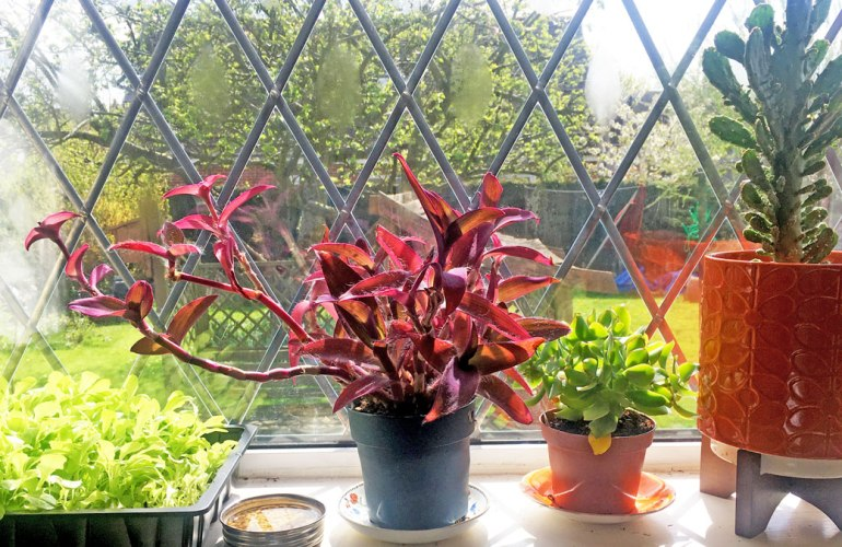 A window sill full of plants (c) Rianne Mason