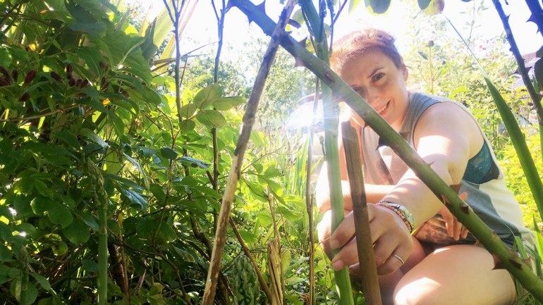 Mature asparagus stalk (c) Rianne Mason