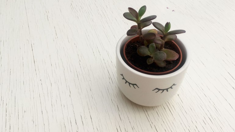 Small plant pot (c) Rianne Mason