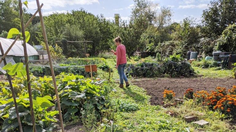 Community garden (c) Rianne Mason