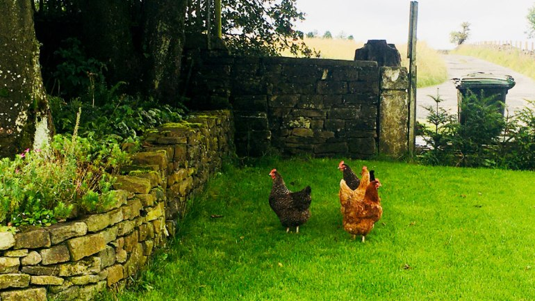 Chickens (c) Rianne Mason