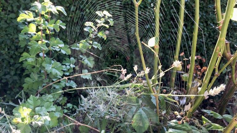 Spider web (c) Rianne Mason