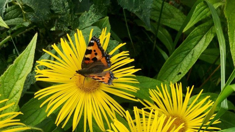 Butterfly (c) Rianne Mason