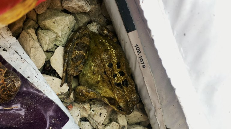 Frog (c) Rianne Mason