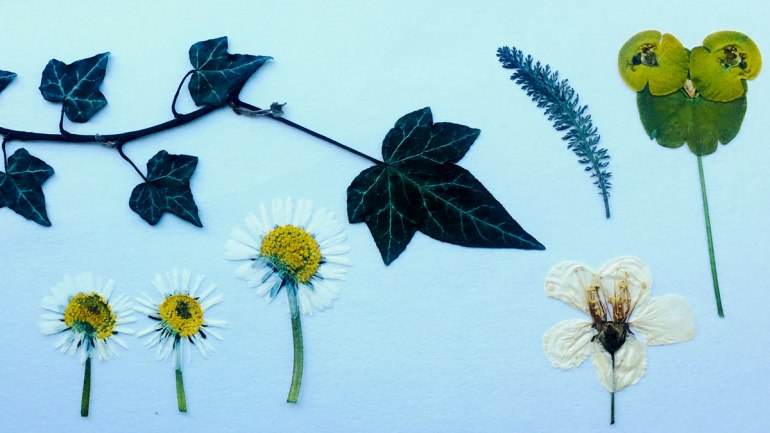 Pressed flowers (c) Rianne Mason