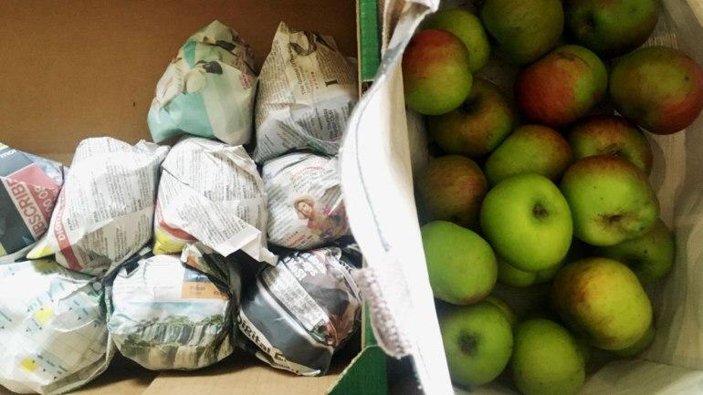 Harvested apples (c) Rianne Mason