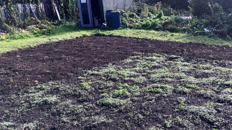 Mustard seedlings (c) Rianne Mason