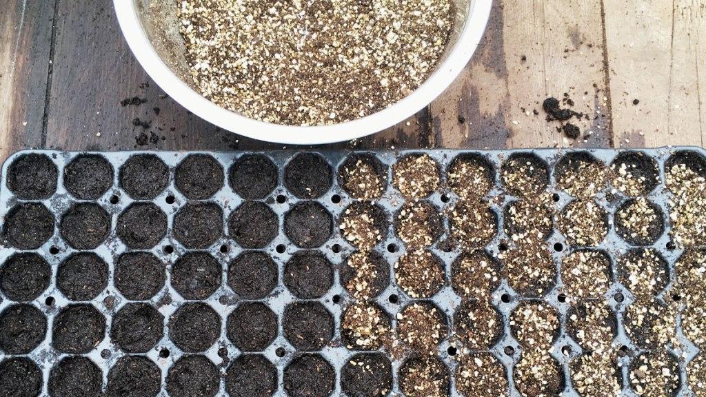 Adding vermiculite to sown seeds (c) Rianne Mason