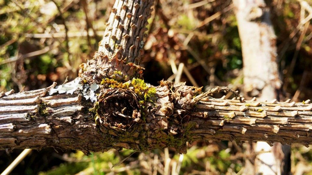 Interesting bark at Henbant (c) Rianne Mason