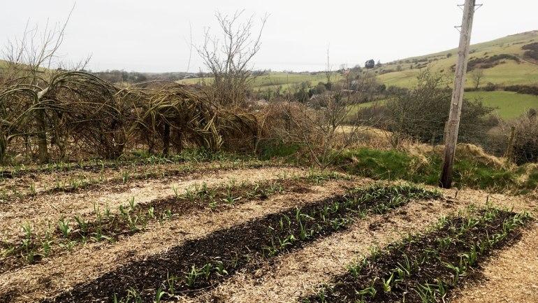 Garlic bed (c) Rianne Mason