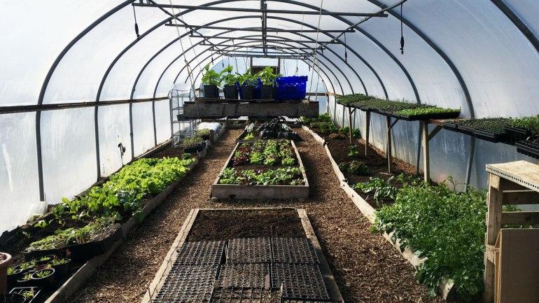 Kitchen garden polytunnel at Henbant permaculture farm (c) Rianne Mason