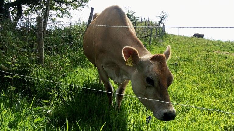 Dora at Henbant permaculture farm (c) Rianne Mason