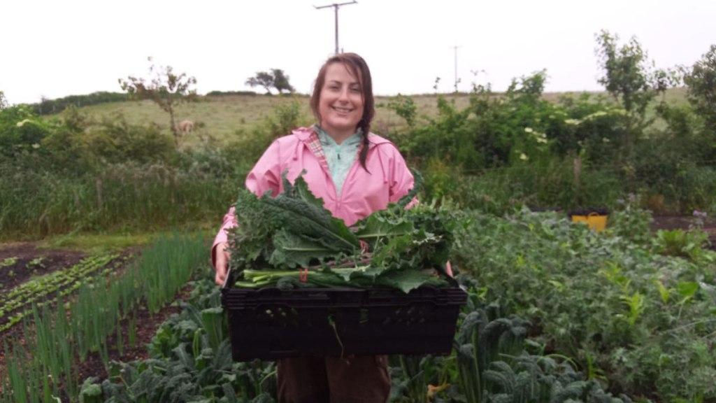 Harvesting kale at Henbant permaculture farm (c) Rianne Mason
